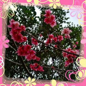 Picsart_1358512226503