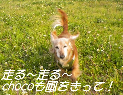 Choco_2